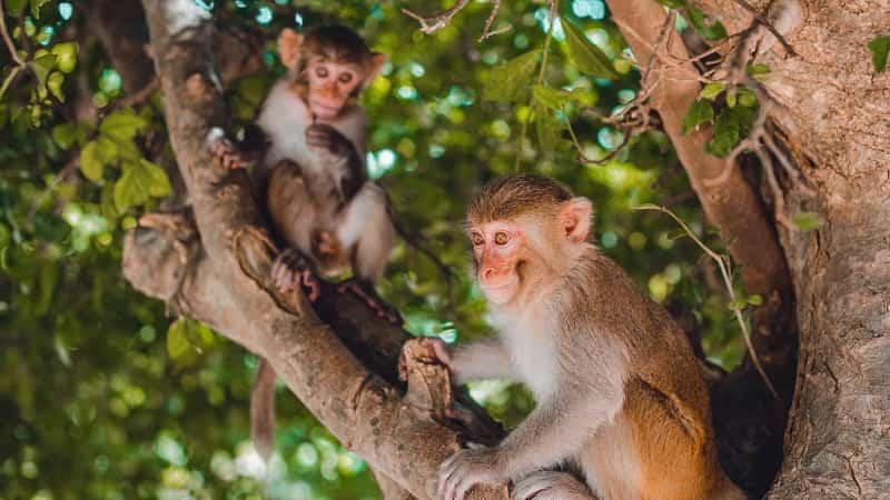 Вьетнам остров обезьян фото