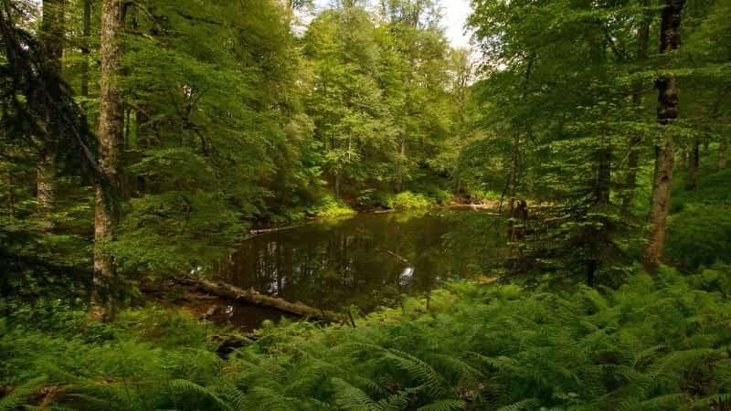 Харгинский лес Роза Хутор