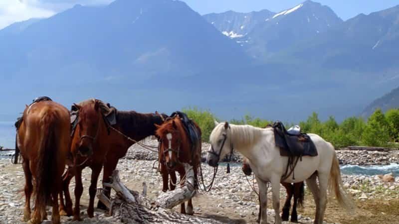 Конные прогулки Байкал фото