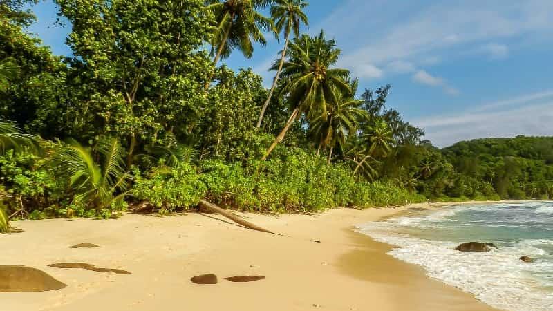 Пляж Сейшелы пальмы